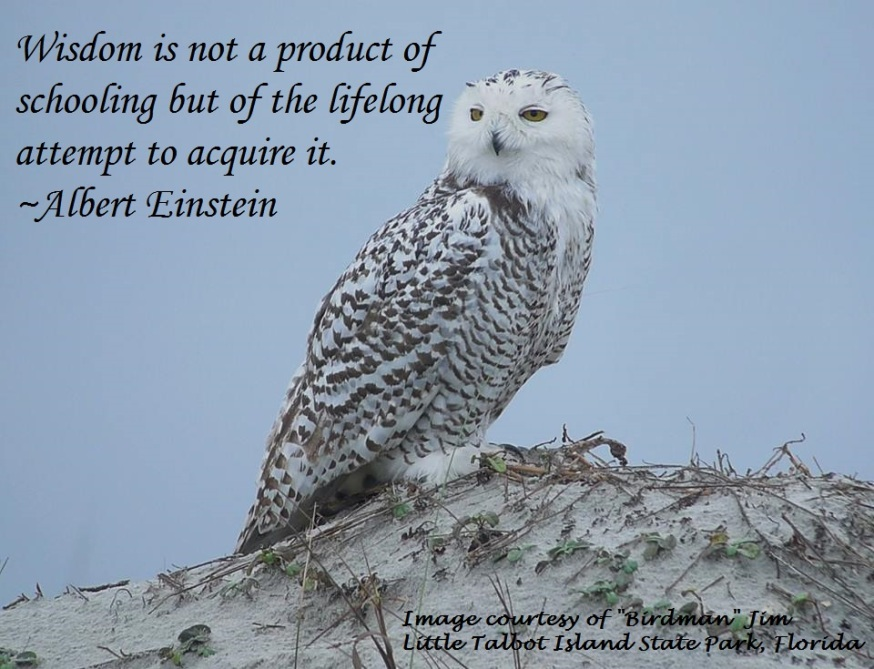 snowy-owl-quote